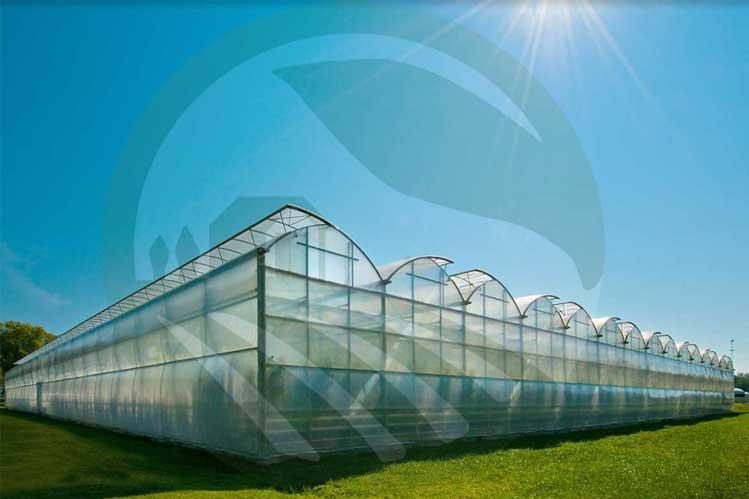 گلخانه های تجاری-نهال رویش