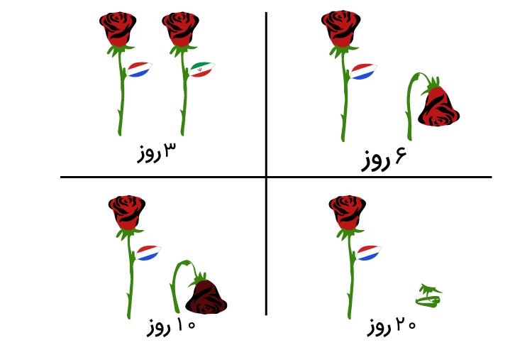 طول عمر و ماندگاری گل های رز هلندی و رز ایرانی
