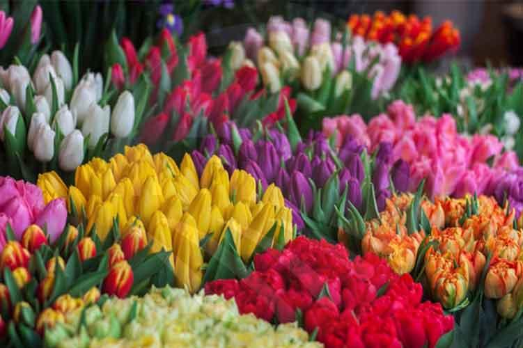 پرورش گل های زینتی در گلخانه-نهال رویش