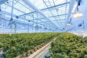 ضرورت احداث و استفاده از گلخانه های صنعتی