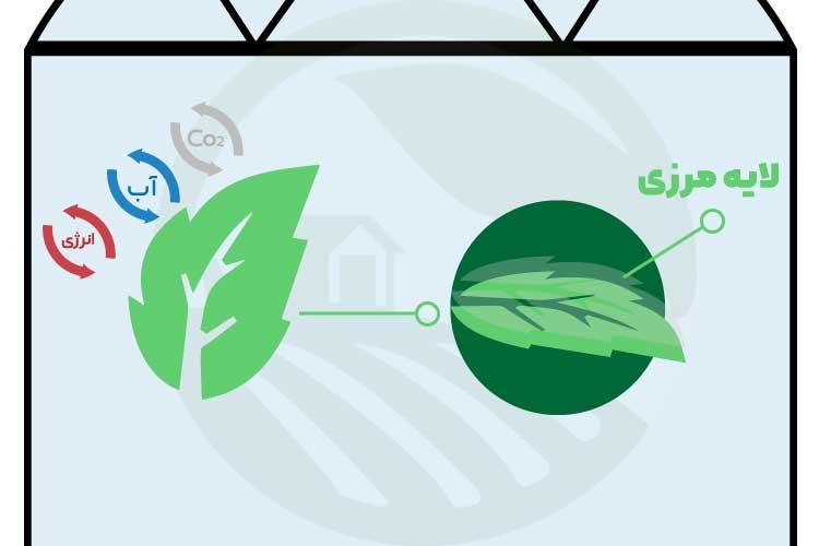 لایه مرزی و تبادل انرژِی، کربن دی اکسید و آب گیاه توسط برگ در گلخانه