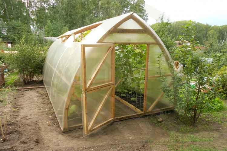 گلخانه گاتیک خانگی-نهال رویش