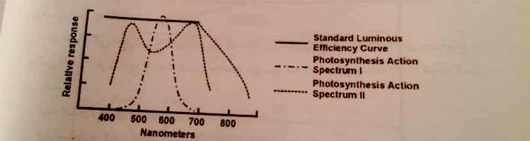 اثر طیفهای مختلف نوری بر رشد گیاه