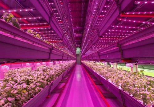 نور مصنوعی در گلخانه