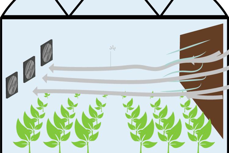 ورود هوای خنک به داخل گلخانه توسط پنکه خارج کننده هوا